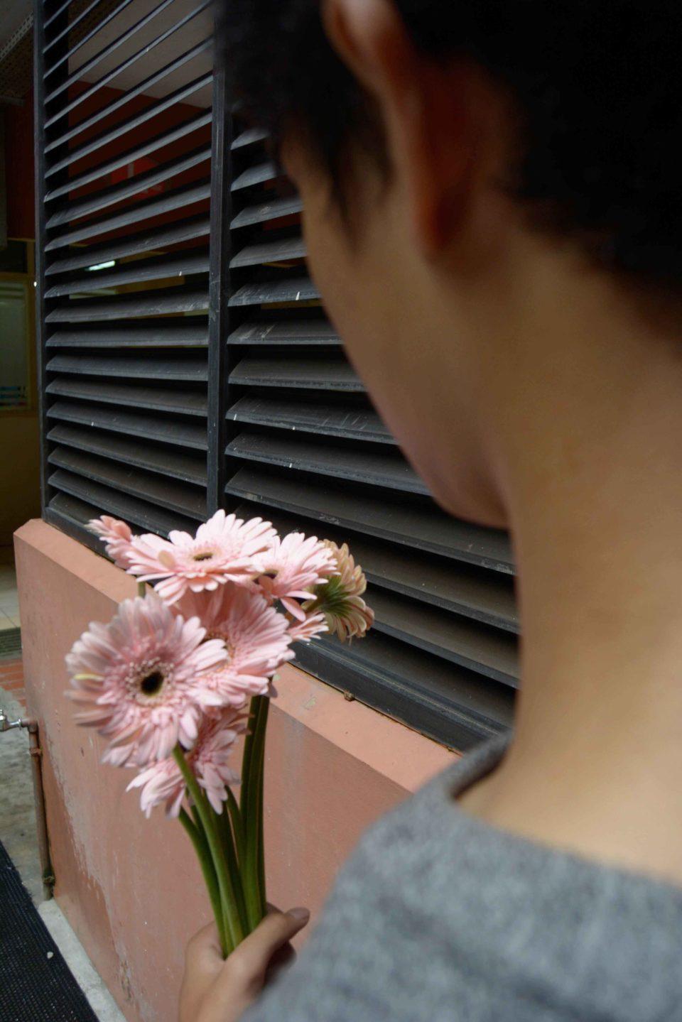 Aster (Asteraceae) - Sachiko Graviela Bianca