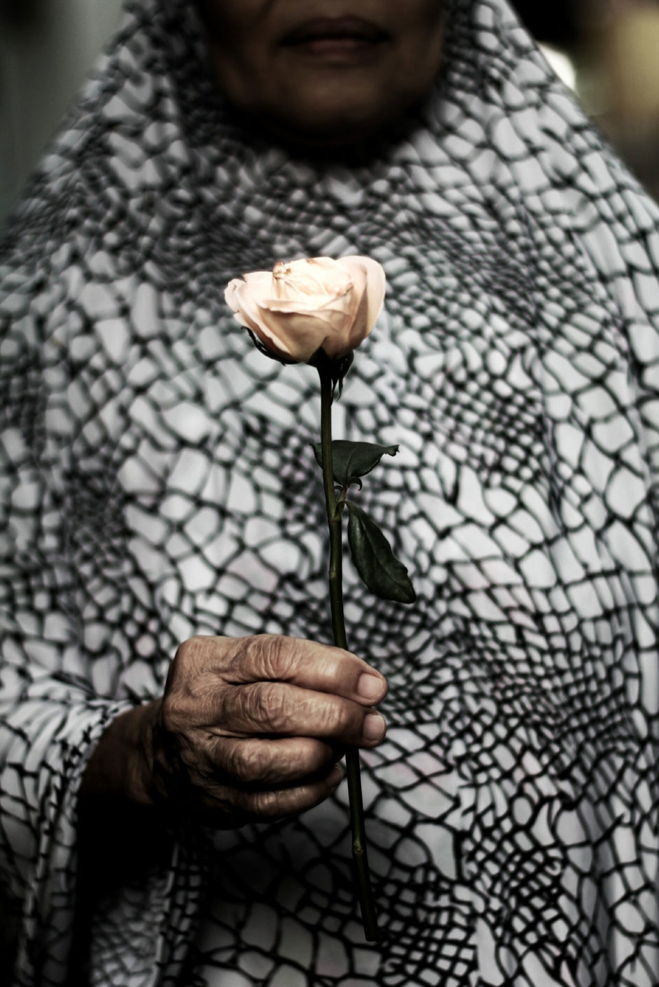 Rose (Rosa) - Adimas Pradana Andaru