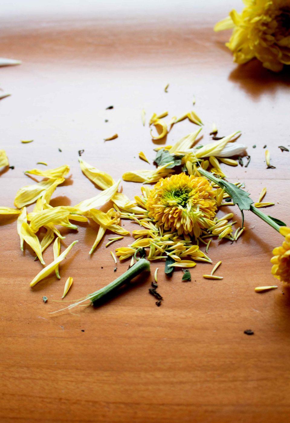 Chrysanthemum (Chrysanthemum.sp) - Benny Sanjaya