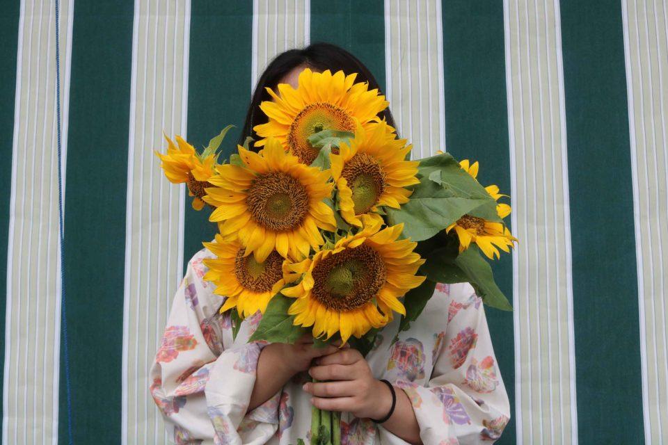 Sunflower (Helianthus annuus) - Dian Pratiwi