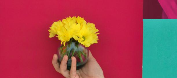 Aster (Asteraceae) – Vivi Rans