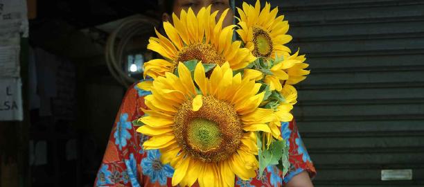 Sunflower (Helianthus annuus) – Dian Pratiwi