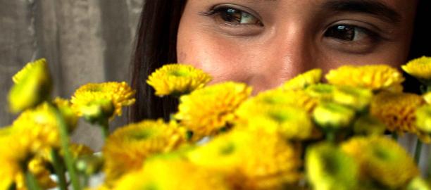 Chrysanthemum (Chrysanthemum.sp) – Benny Sanjaya