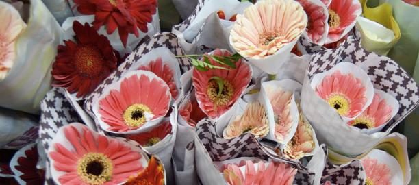 Aster (Asteraceae) – Sachiko Graviela Bianca