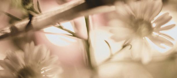 White Peacock – Vincent Soehartono